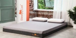 SleepyCat Mattress Review