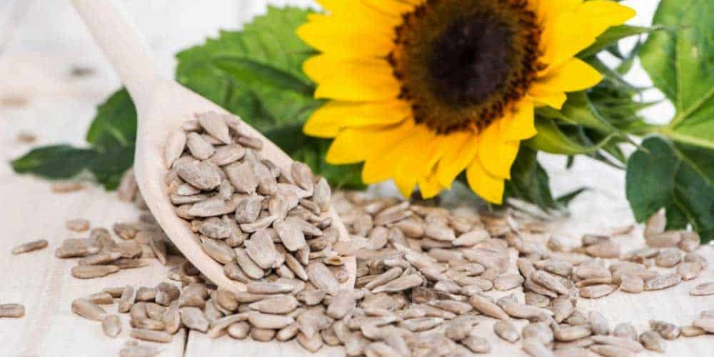 Sunflower Seeds Benefits For Skin And Hair